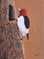 redcappedwoodpecker