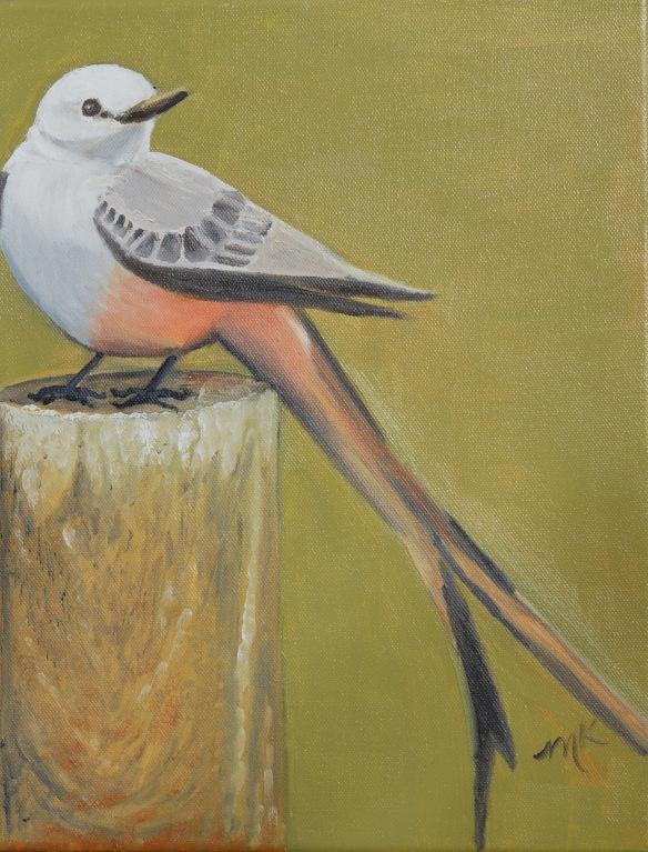 scissorwing flycatcher