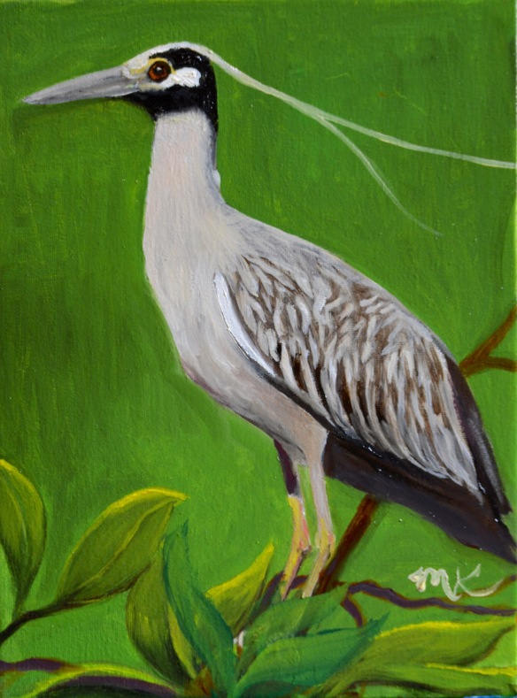 yellow crowned night heron